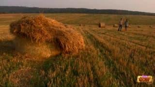 scopata in campo di grano !